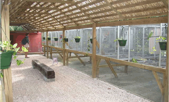 Completed presentation of St Maarten Zoo's suspended bird cages and birds.