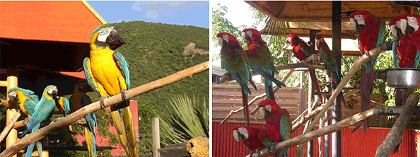Macaw stands.
