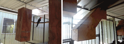 Examples of nest boxes for King Parrots, the grandfather clock style nest box on the left and the Z-style box on the right