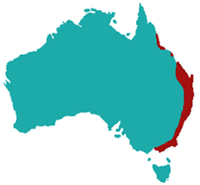 Map of Australia showing the distribution of the Australian King Parrot