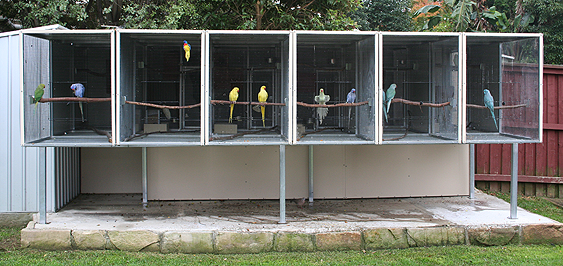 Bank of suspended aviaries housing Ringnecks and Scarlets