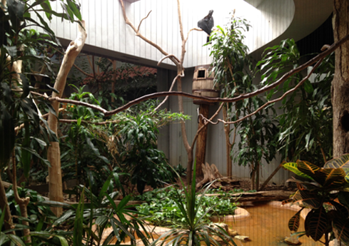 Rhinoceros Hornbill Exhibit