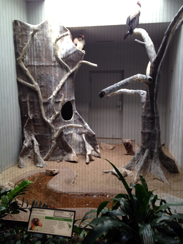 King Vulture Exhibit