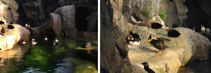 St Louis Zoo Puffin enclosures