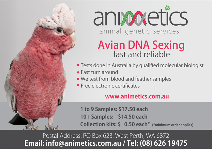Animetics - Avian DNA Sexing (fast and reliable)