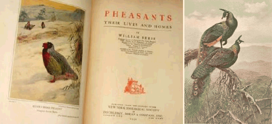 """Pheasants:  Their Lives and Homes"" by William Beebe"